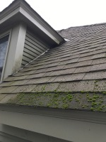 clean roof Mansfield, remove bacteria, softwash stained roof