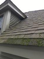 moss on roof, black streaks