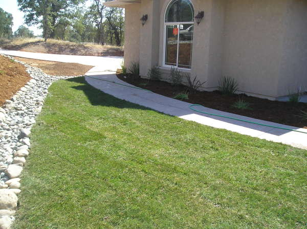 New construction landscaping