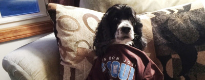 Could Bon Jovi Turn You Into Pavlov's Dog?
