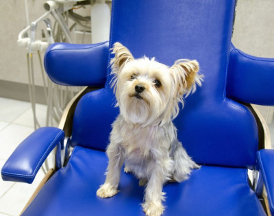 Your Pet's Vet Appointment - Set Yourselves Up For Success