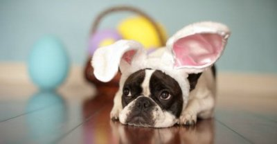 Pet Easter