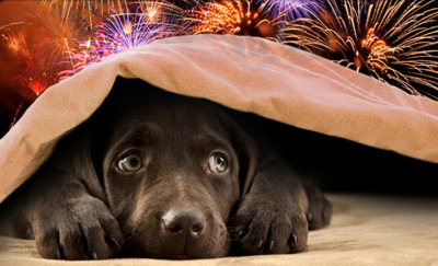 Does Your Dog Suffer Through 4th of July?