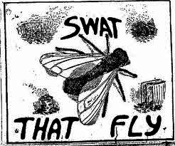 Fly Killers - Teen Blog
