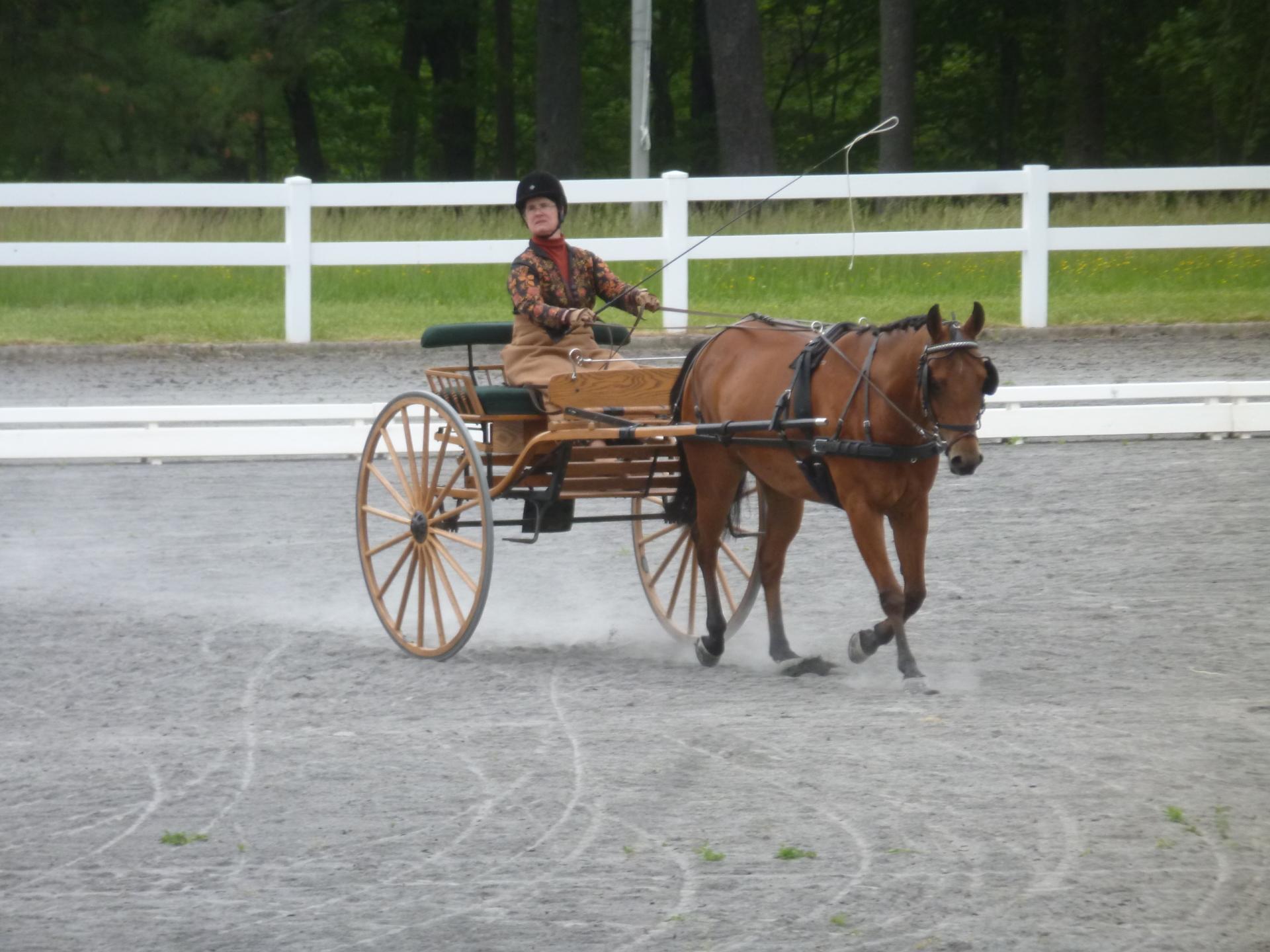 Mary Mott-Kocsis in Dressage