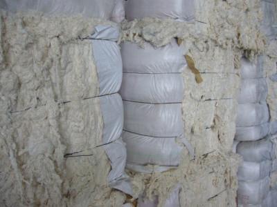 Cotton Recovery