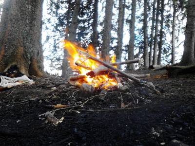 Fire burning in middle of forest