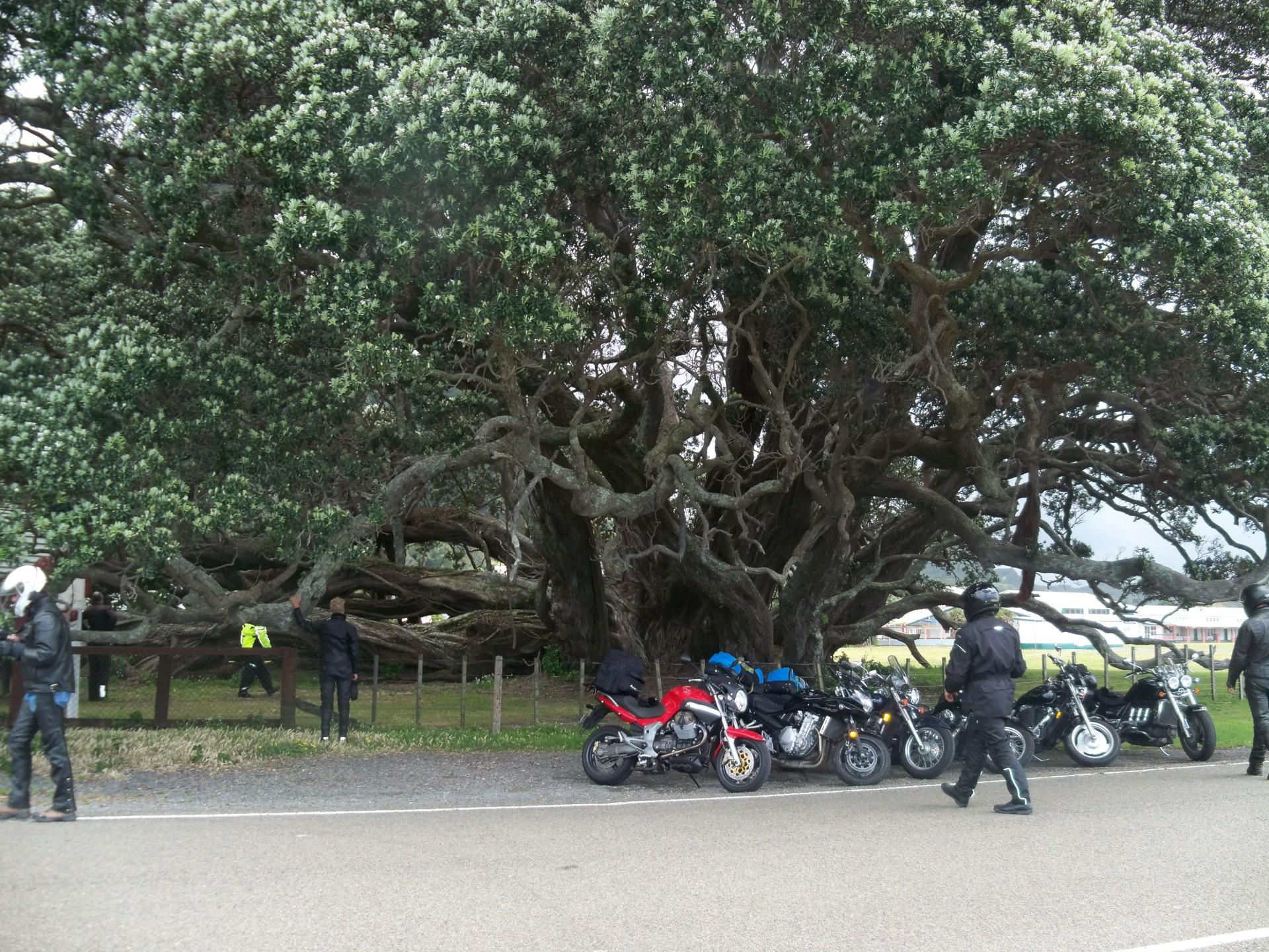 Break time under a Pohutukawa Tree