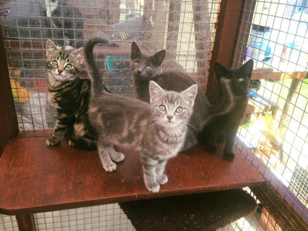 Rescue cats in County Durham