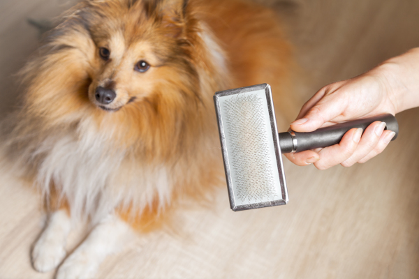 dog with hairbrush, pet hair