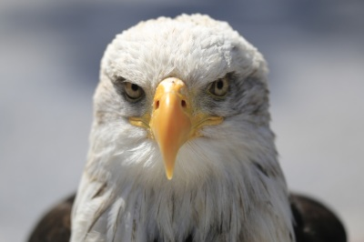 Getting Past the Eagle Eye of the Publisher