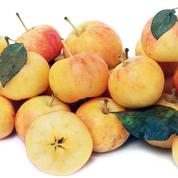 Transcendent Crabapple Fruit