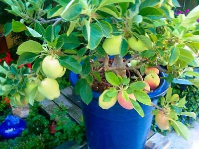 Pacific Groves Plant Descriptions