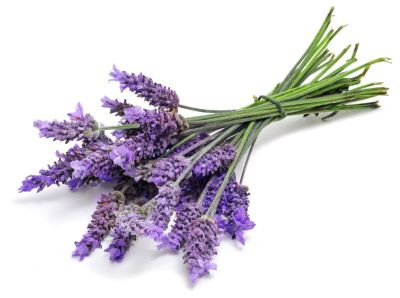Lovely Lavender (Not my photo)