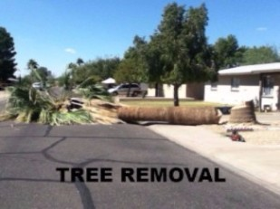 TREE REMOVAL / HAUL AWAY