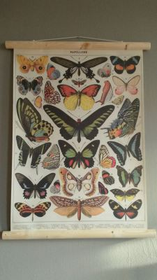 Butterflies school poster
