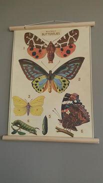 Butterflies school poster nbr. 2