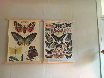 Butterflies posters in pair