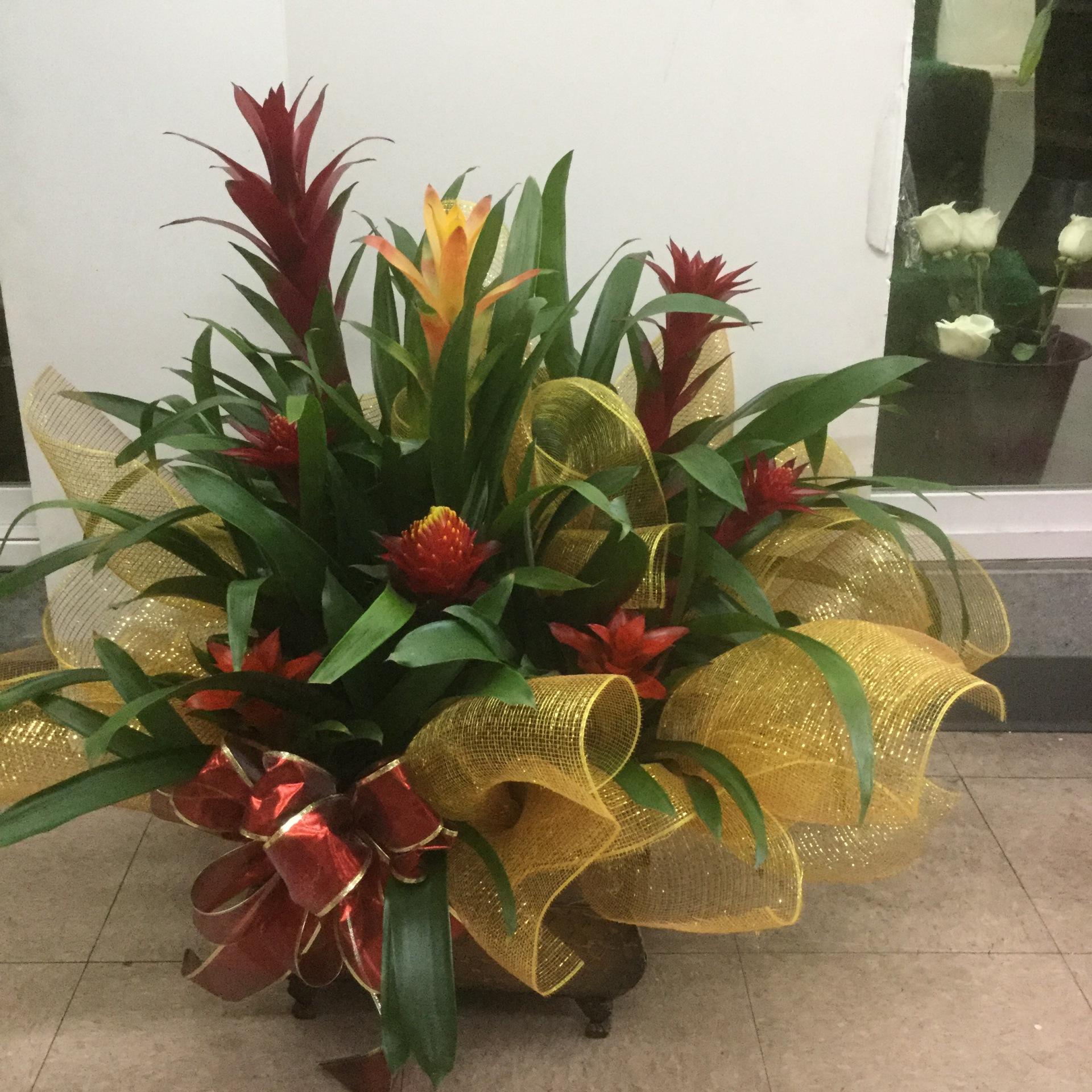 Bromeliad Arrangement