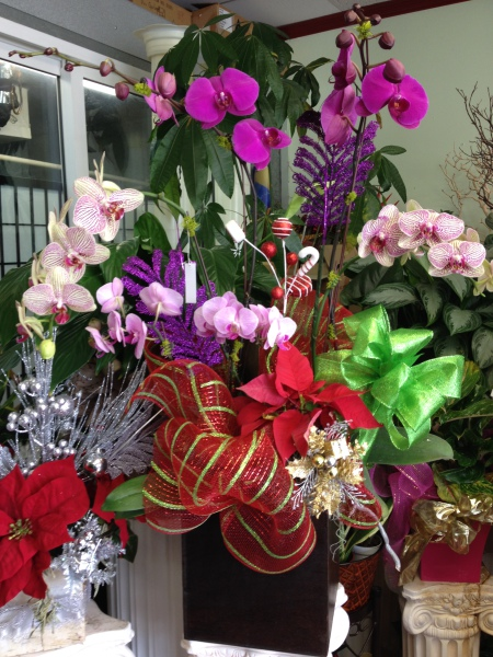 Orchid Arrangement - Holiday Theme