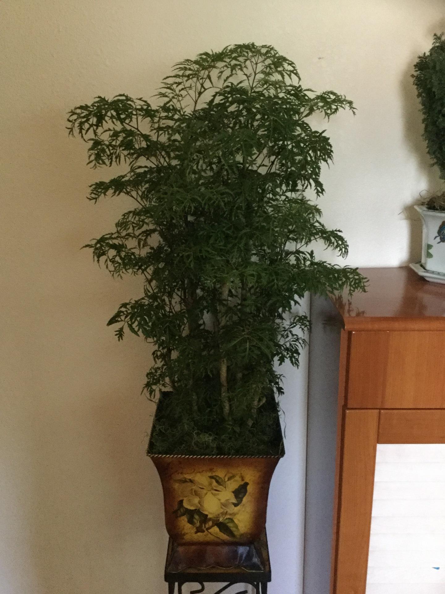Happy Tree - Large