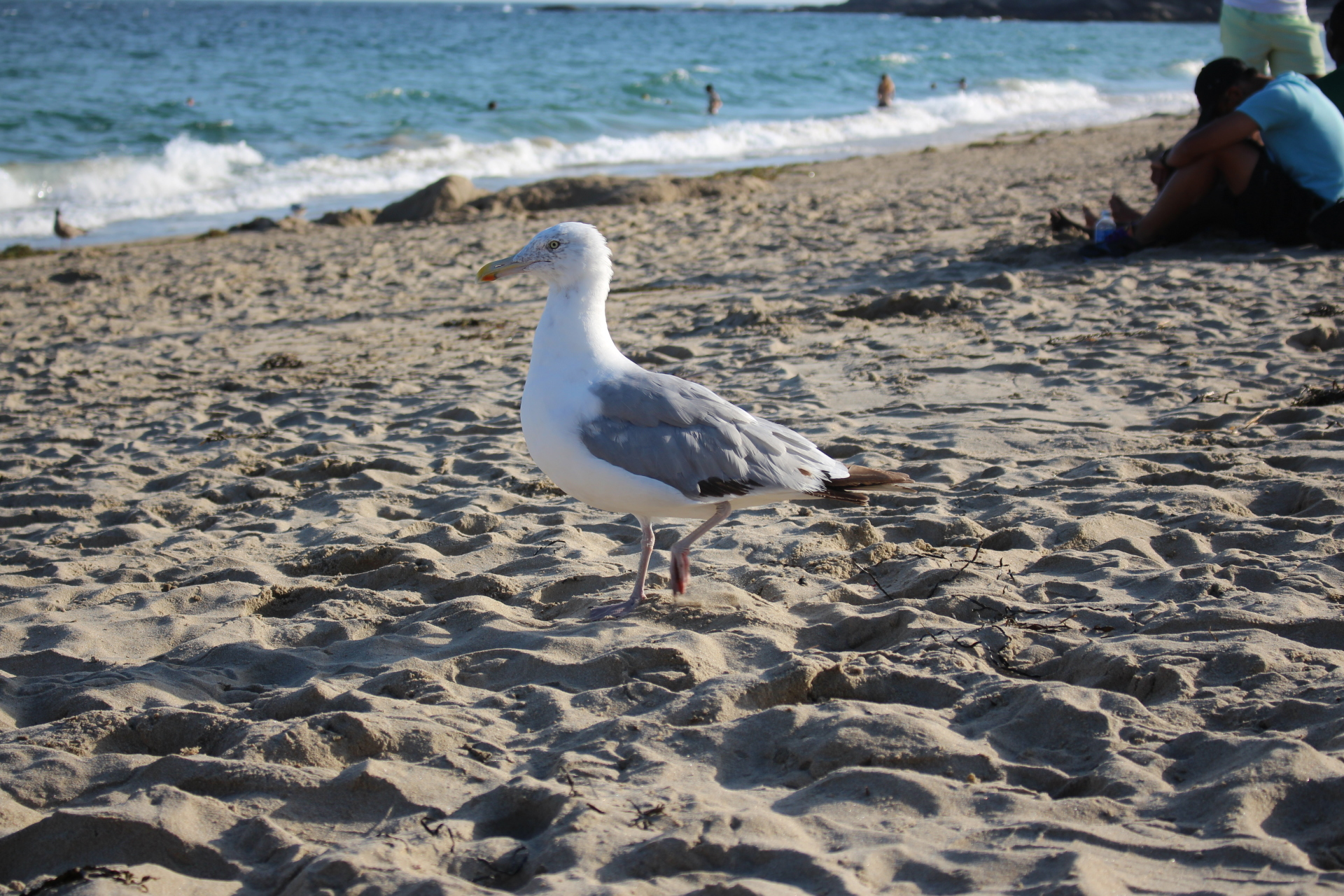 Salem Seagull