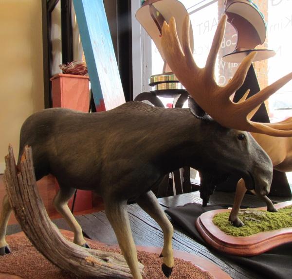 Alaskan/Canadian Moose