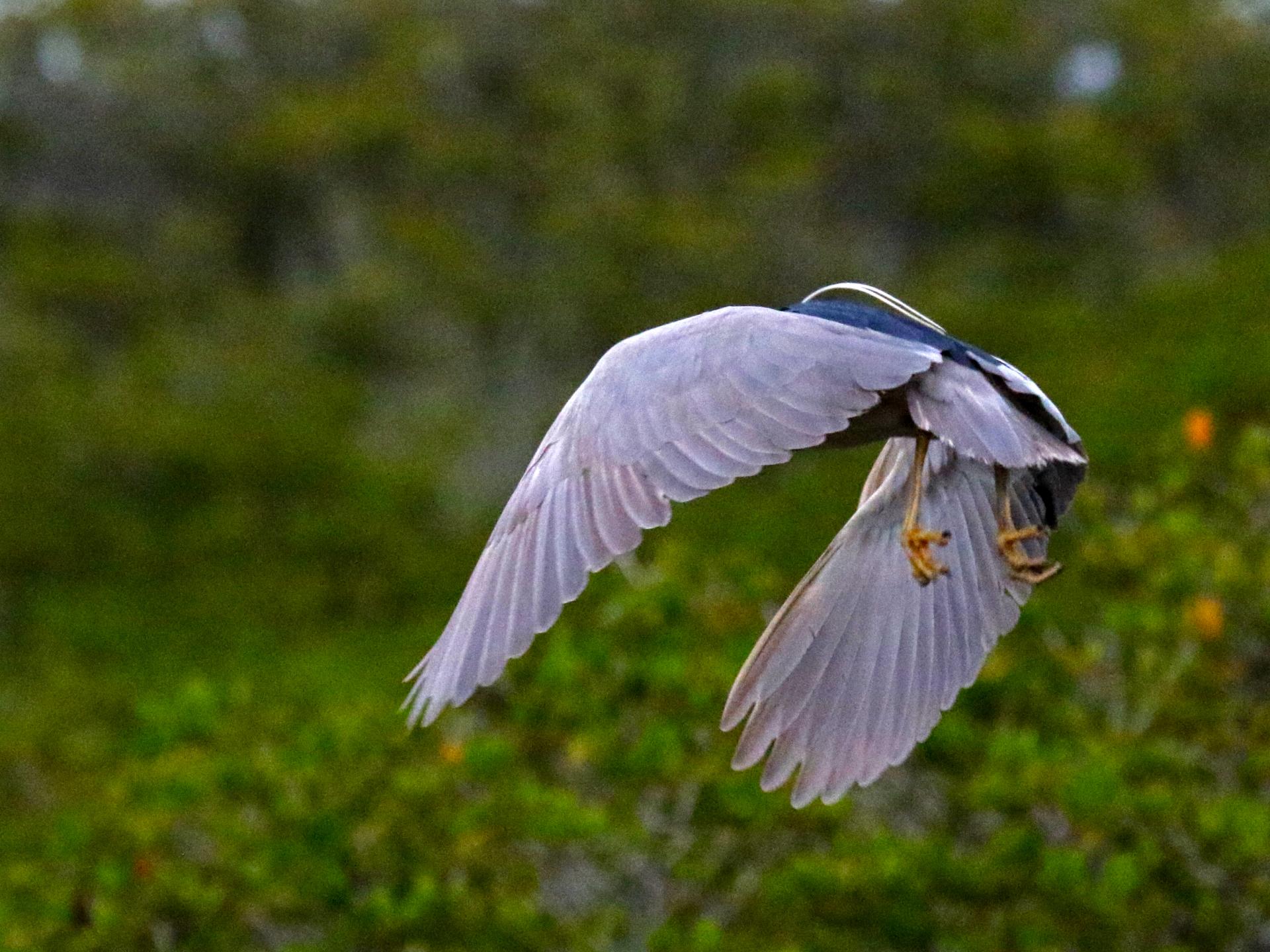Beaches and Birds Participates in Global Birding Initiative
