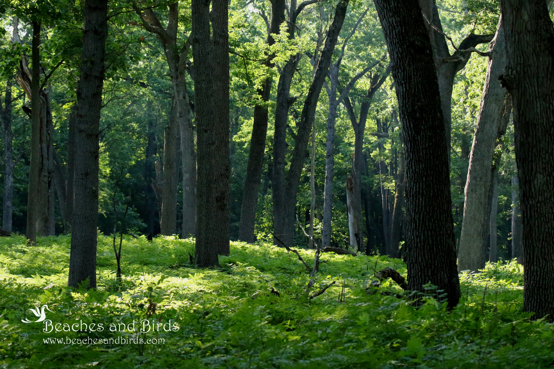 Oak Openings is unlike any other habitat in Ohio