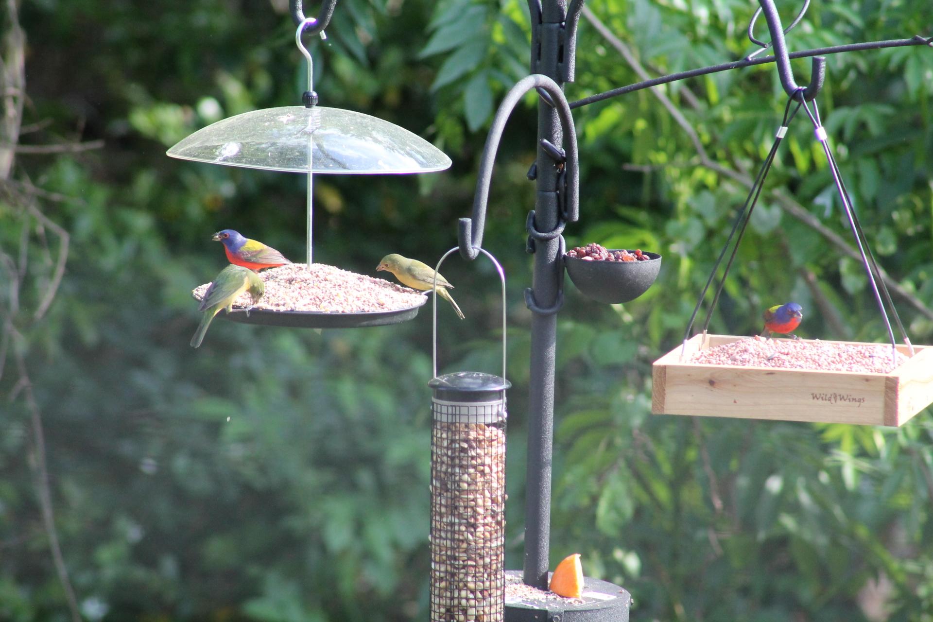 Backyard Birding Part II