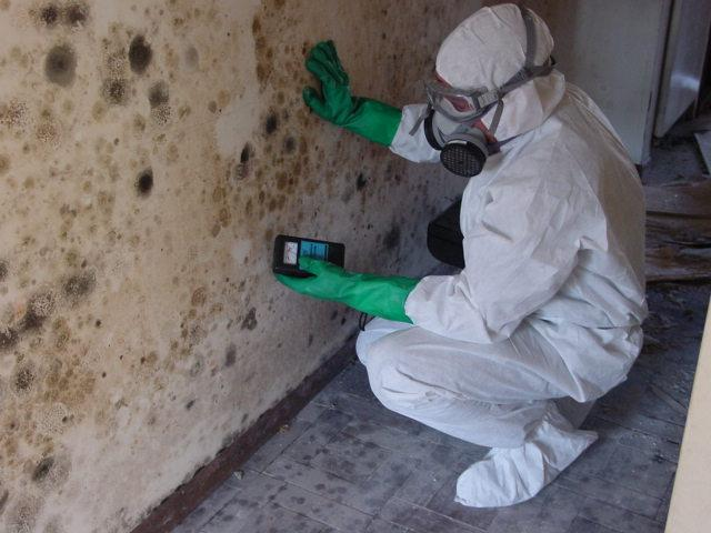 Mold Remediation and Bio-Hazard Clean Up