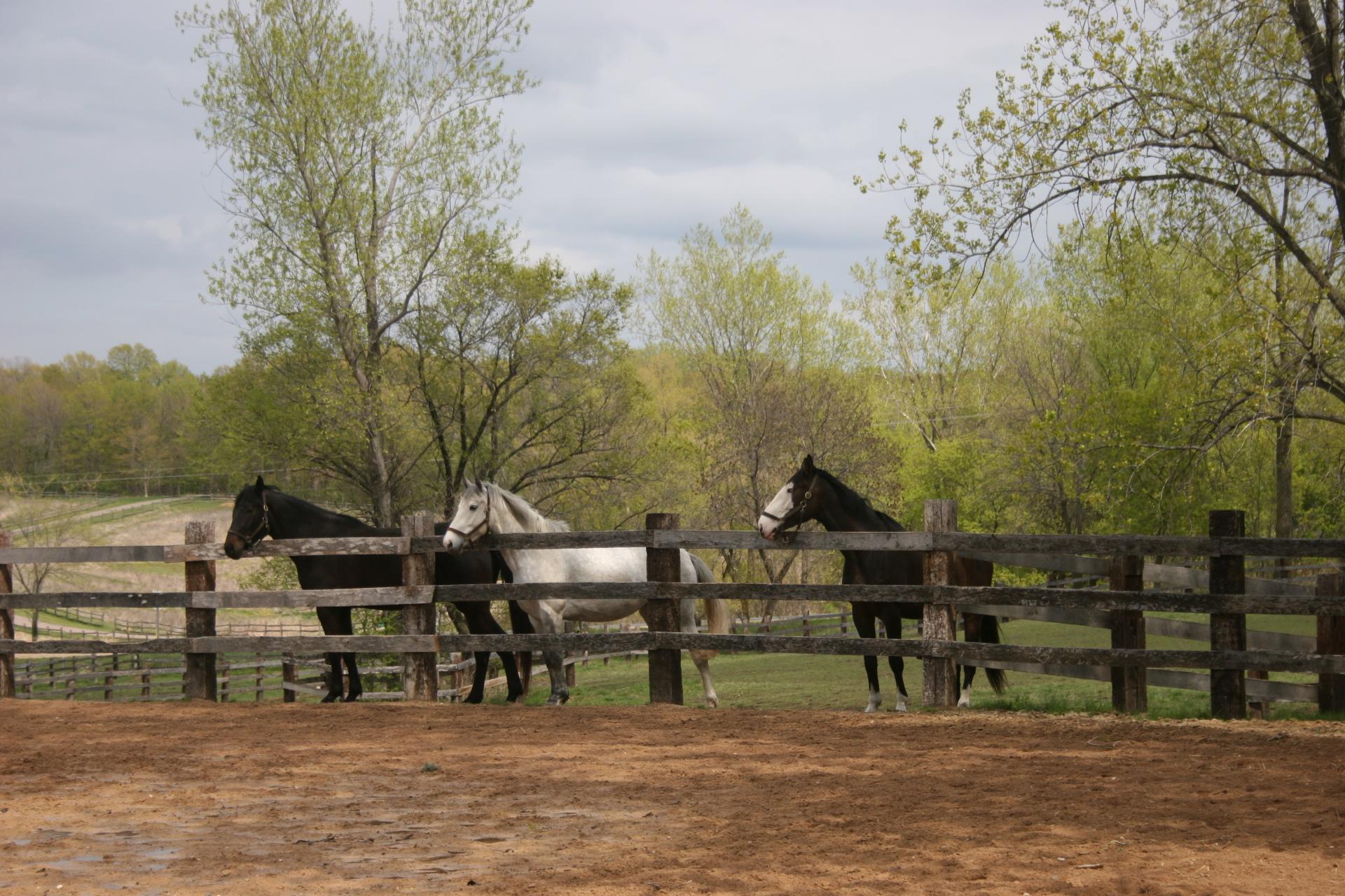 pastured horses skyrock farm