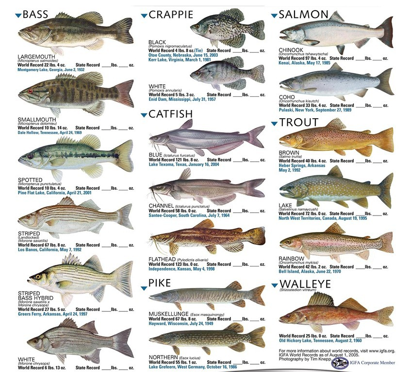 Freshwater Fishin'