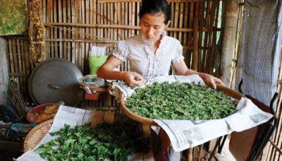 #cambodia #silk