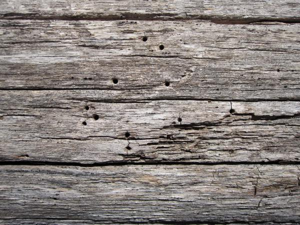 Wood Destroying Insect inspections for Home Buyers