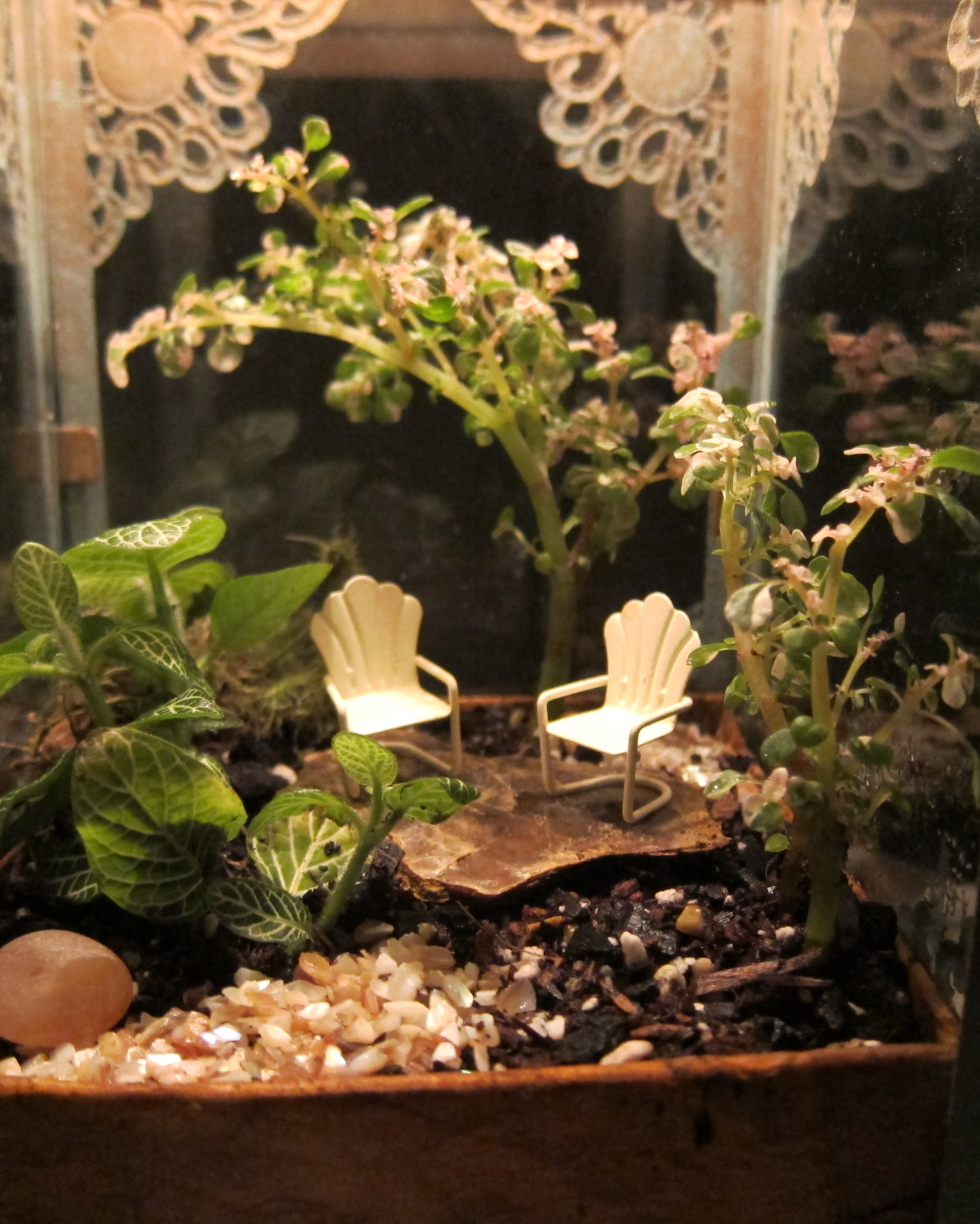 The Art of Making Terrariums