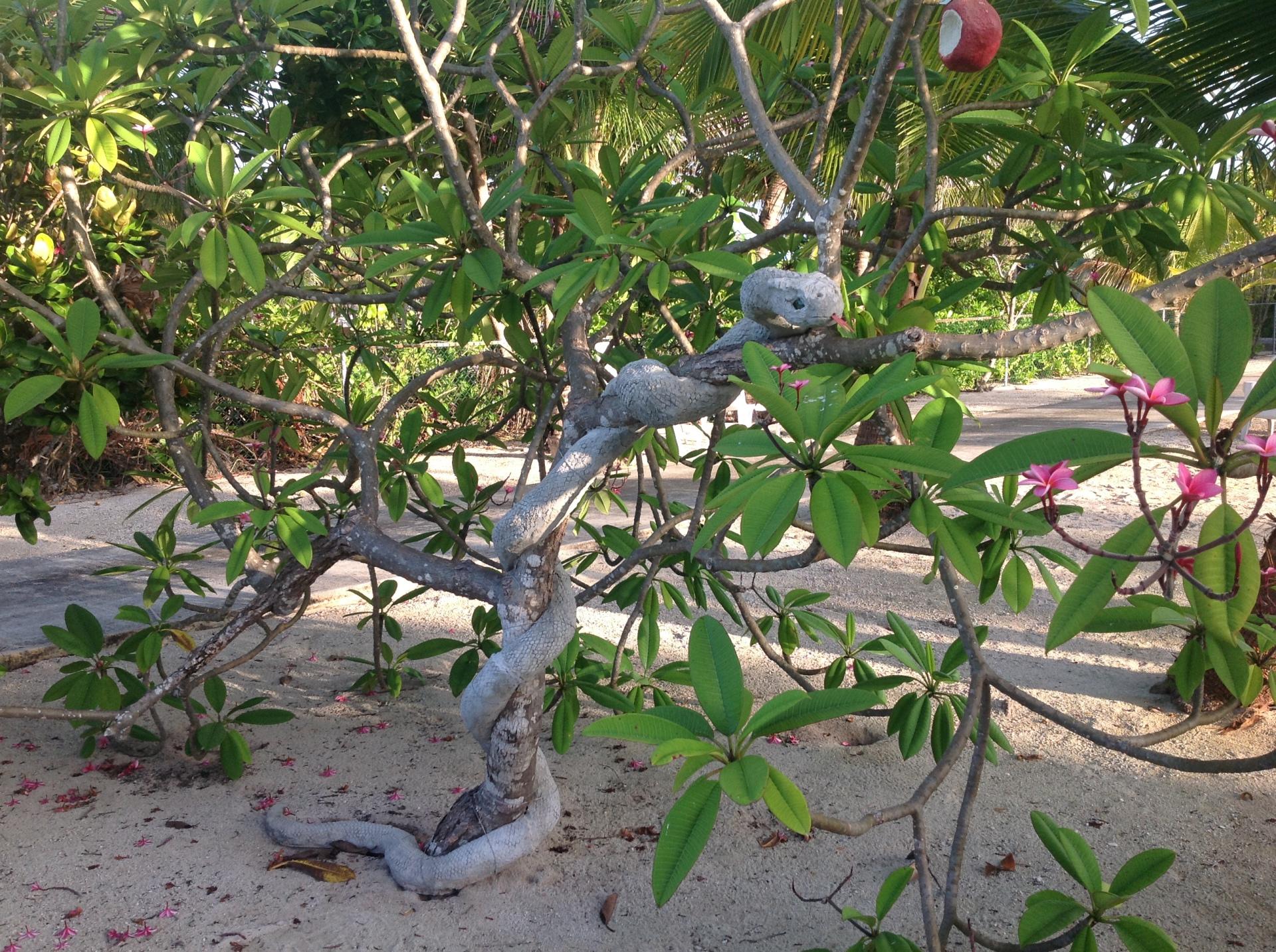 SERPENT IN THE TREE OF KNOWLEDGE IN THE GARDEN OF EDEN