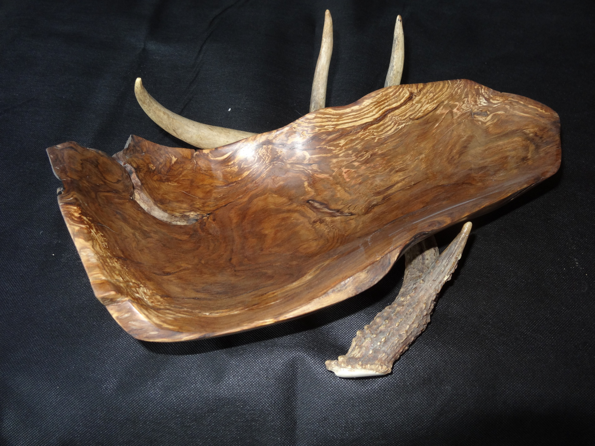 Black Gum on Whitetail Antler (medium)
