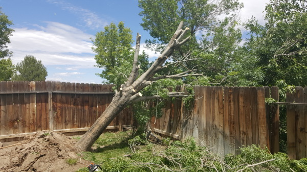 Emergency  tree removal