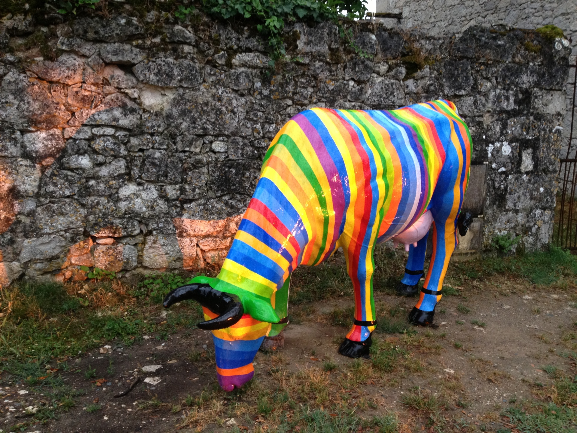Cow in Montjoi