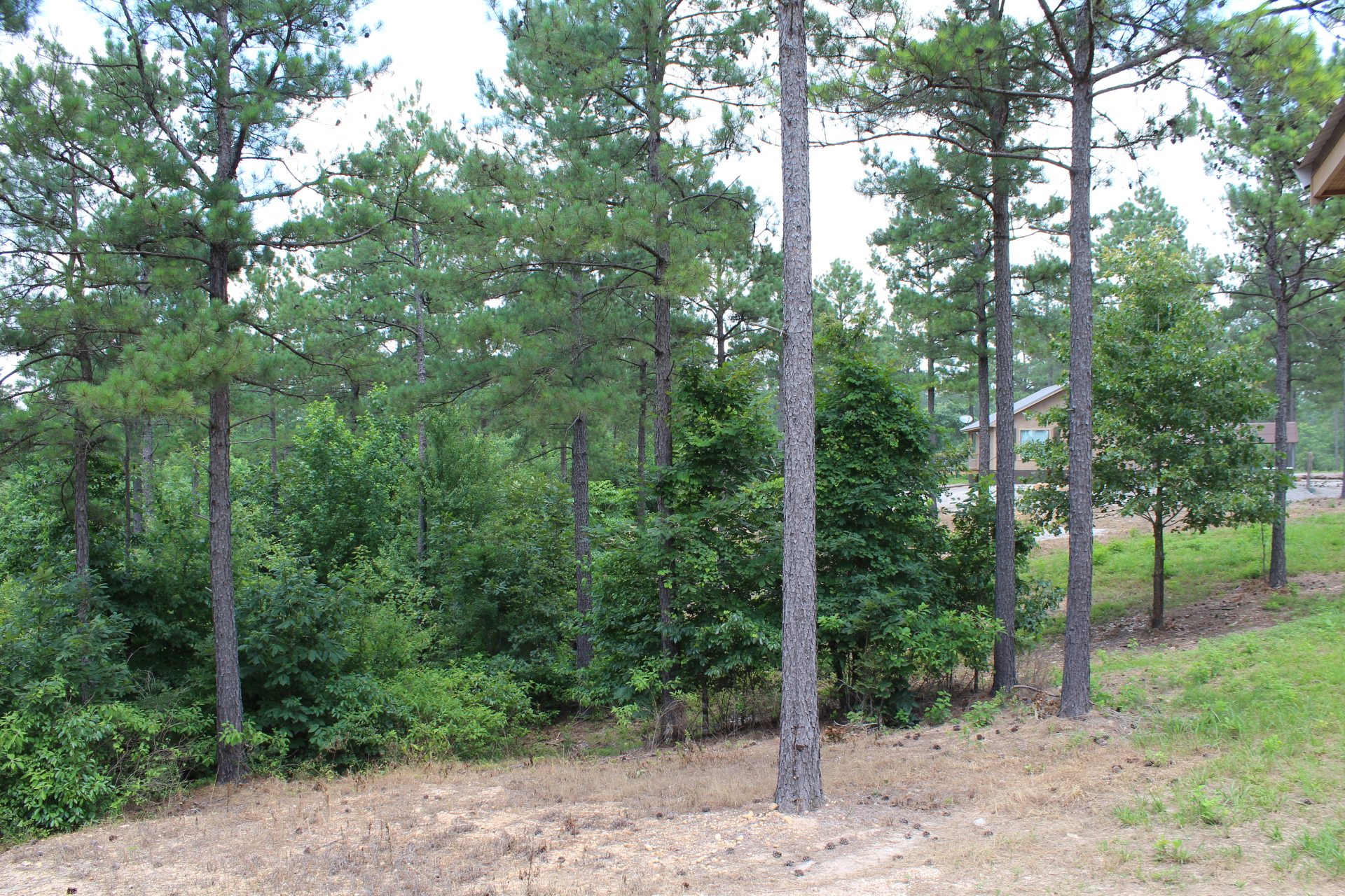View of Cabin 1 from Cabin 2