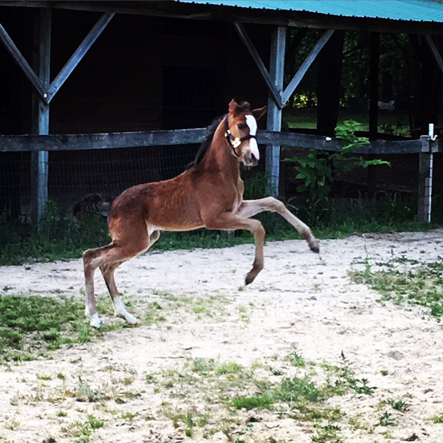 Rescue Foal