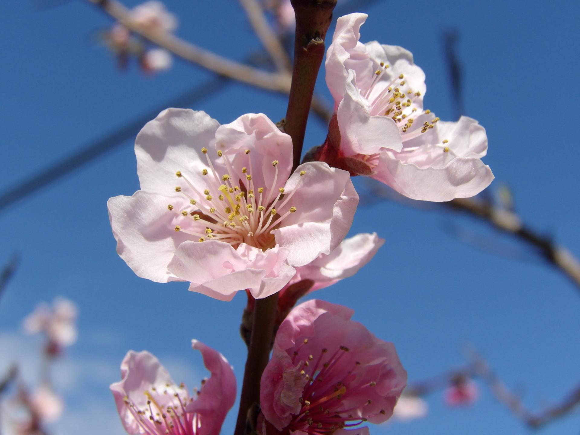 Title spring pink