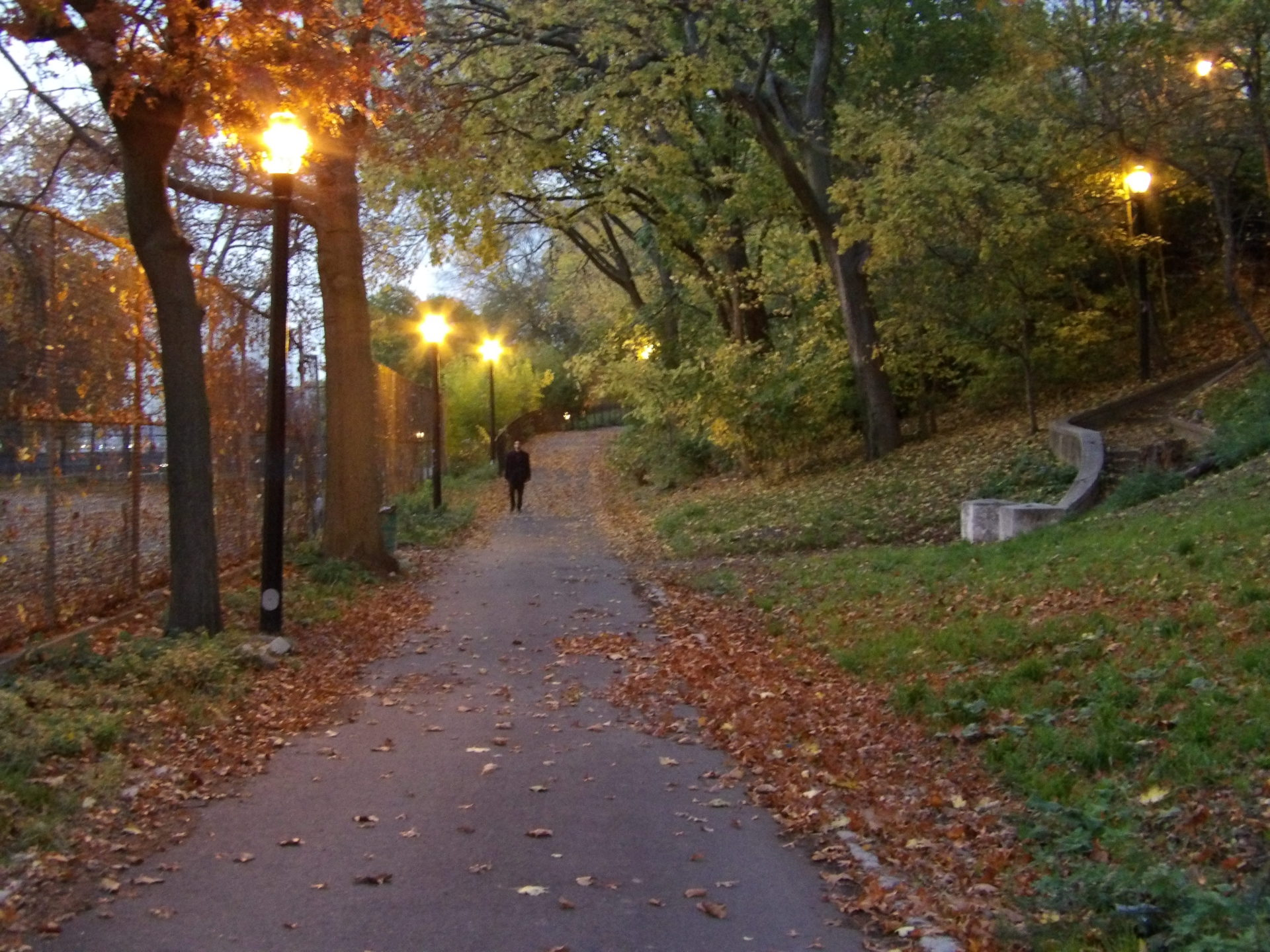 Park, night, pathway