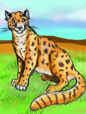 cheetah,sketch
