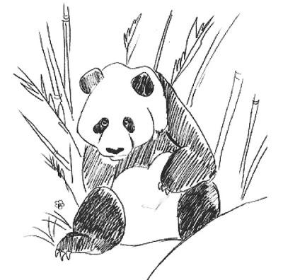 panda,sketch, animal