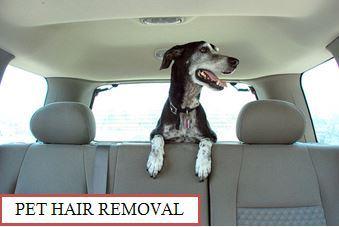 Pet Hair Removal Interior Detail Servie