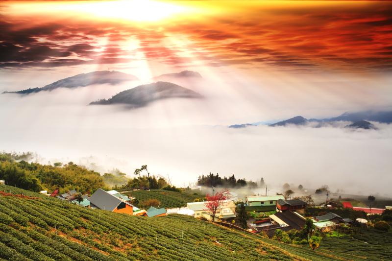 Amazing Days on Alishan Mountains