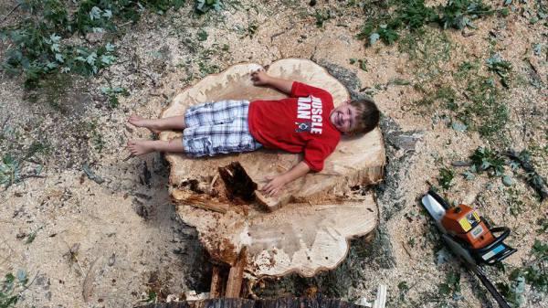 Tree & Stump Removal