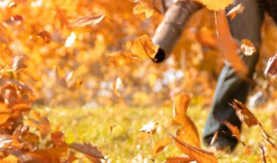 Fall and Spring Cleanup